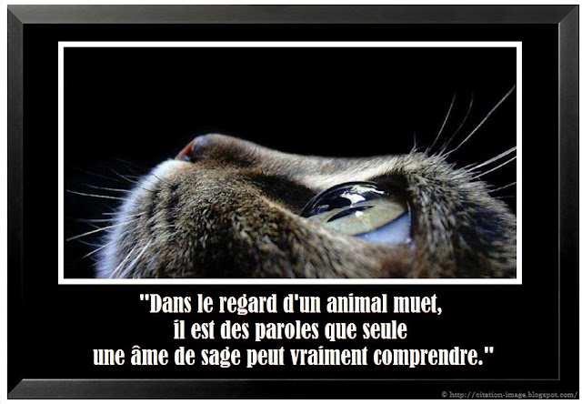 Citation comprendre en image citation en image photo for Comprendre la mort
