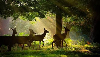 تصوير الحياة البرية