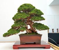Un doble tronco caracoleando hacia arriba