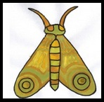 moth, cute moth, draw moth, how does moth look, easy moth