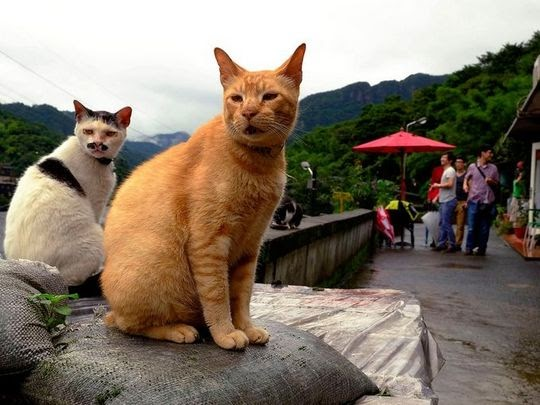 Houtong cats