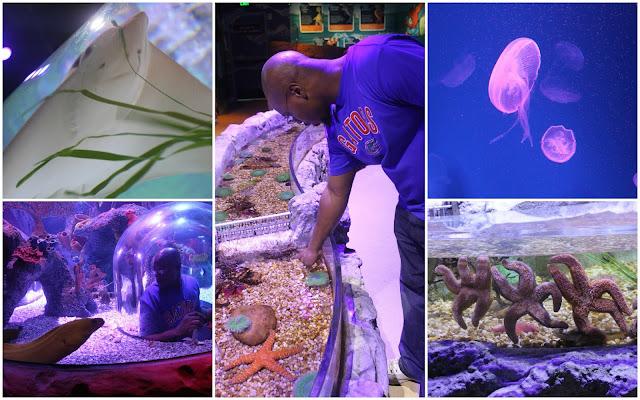 Sea Life Orlando Aquarium I-Drive 360 Sting Ray Jellyfish Eel Sea Star Anemone Fish Sharks