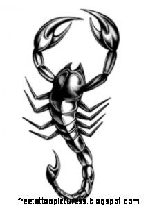 Scorpion Tattoos on Pinterest  Scorpio Tattoos Spider Tattoo and