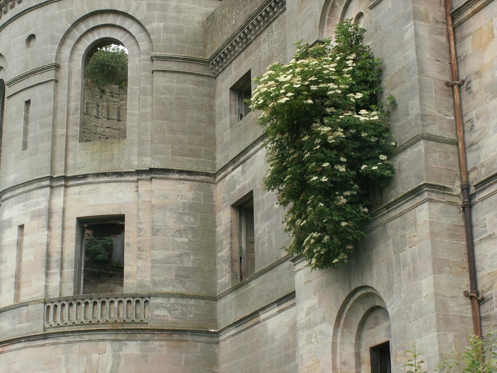 cubo et excubo: dalquharran castle