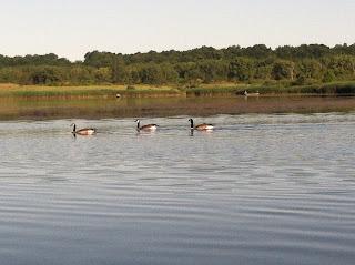 Goose Hunting Illinois