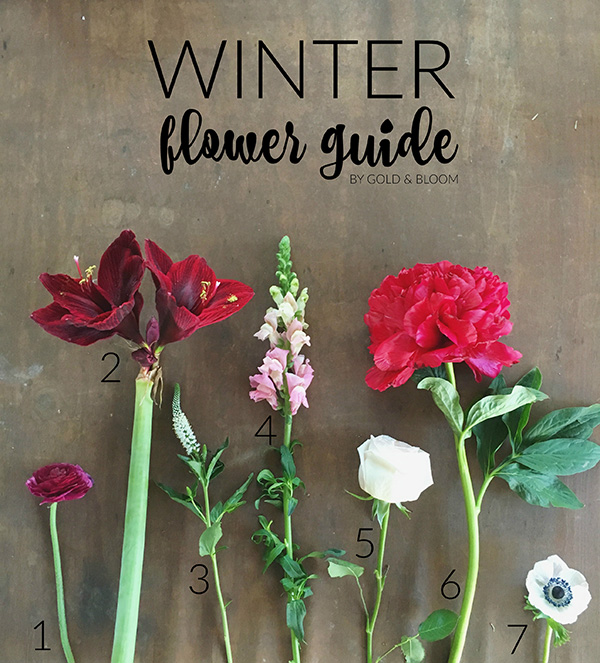 Interiors by jacquin winter flower guide enjoy flowers this winter 1 ranunculus this is my all time favorite flower and use it in pretty much every arrangement i make you can find it pretty much year round in various mightylinksfo