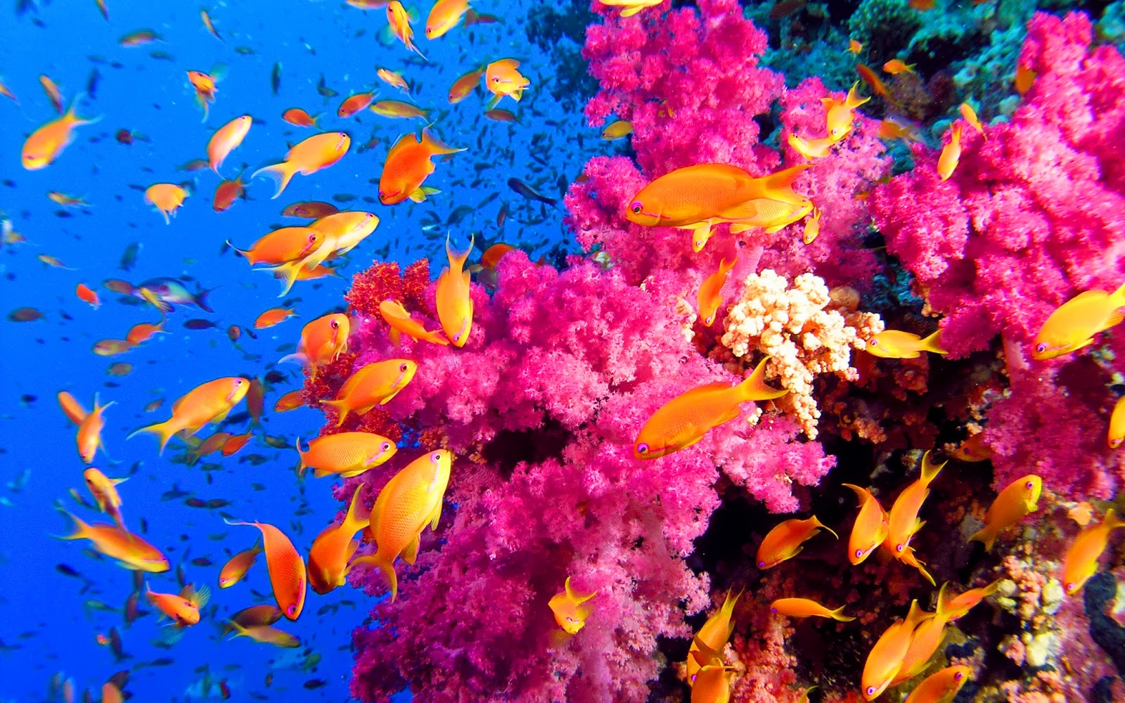 coral reef photos on pinterest coral reefs macros and coral