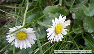 Fleurs d avril