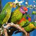 Hình Nền Đẹp - Beautiful wallpapers - Hình Nền Đẹp - Chim Vẹt