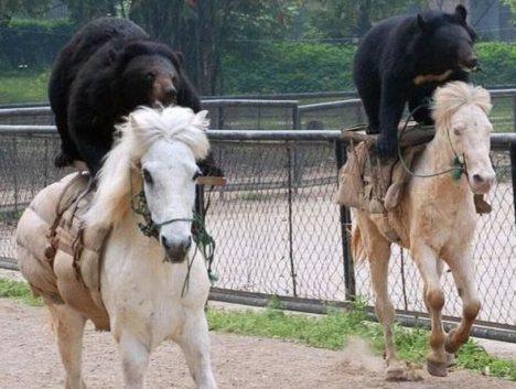 foto beruang lucu - gambar binatang - foto beruang lucu