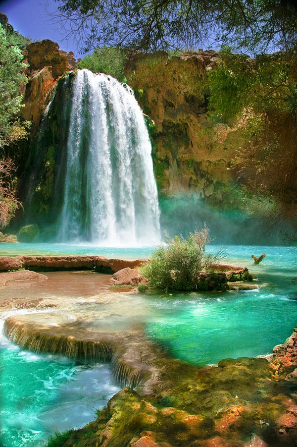 Simply amazing havasu falls in havasu creek arizona for Amazing places in the united states