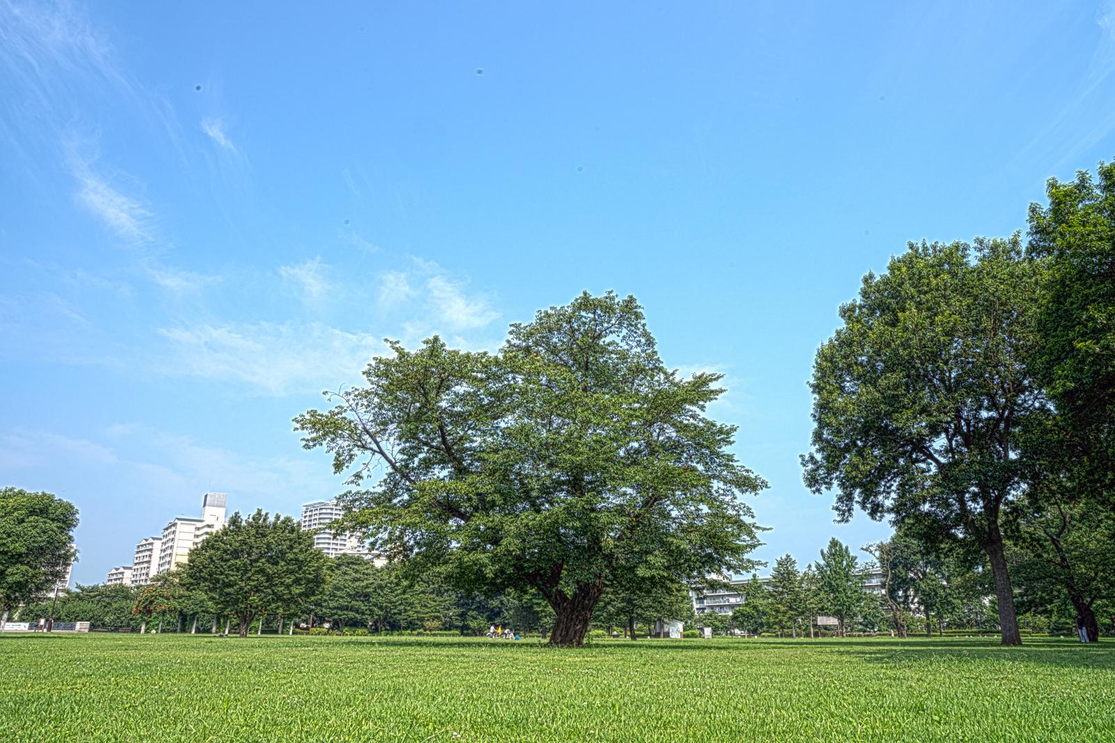 芝広場の写真