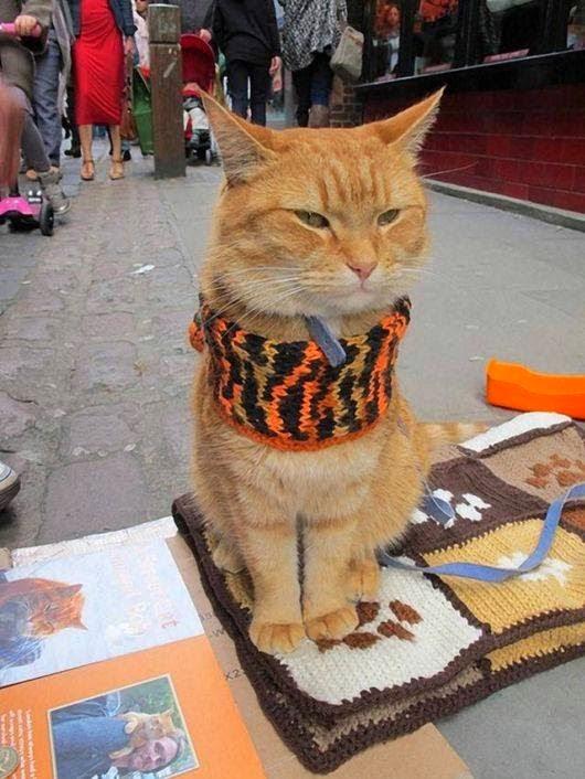 Street Bob cat