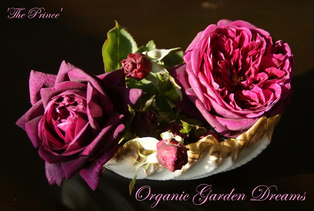 Organic Garden Dreams