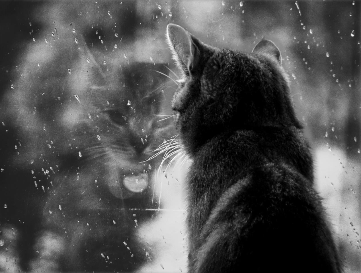 cat in the rain essay cat in the rain critical essay the s