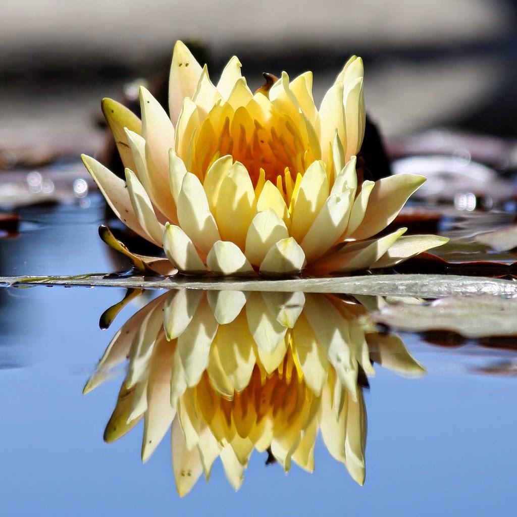 gratitud-loto