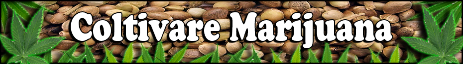 Coltivare Marijuana - Semi di Marijuana