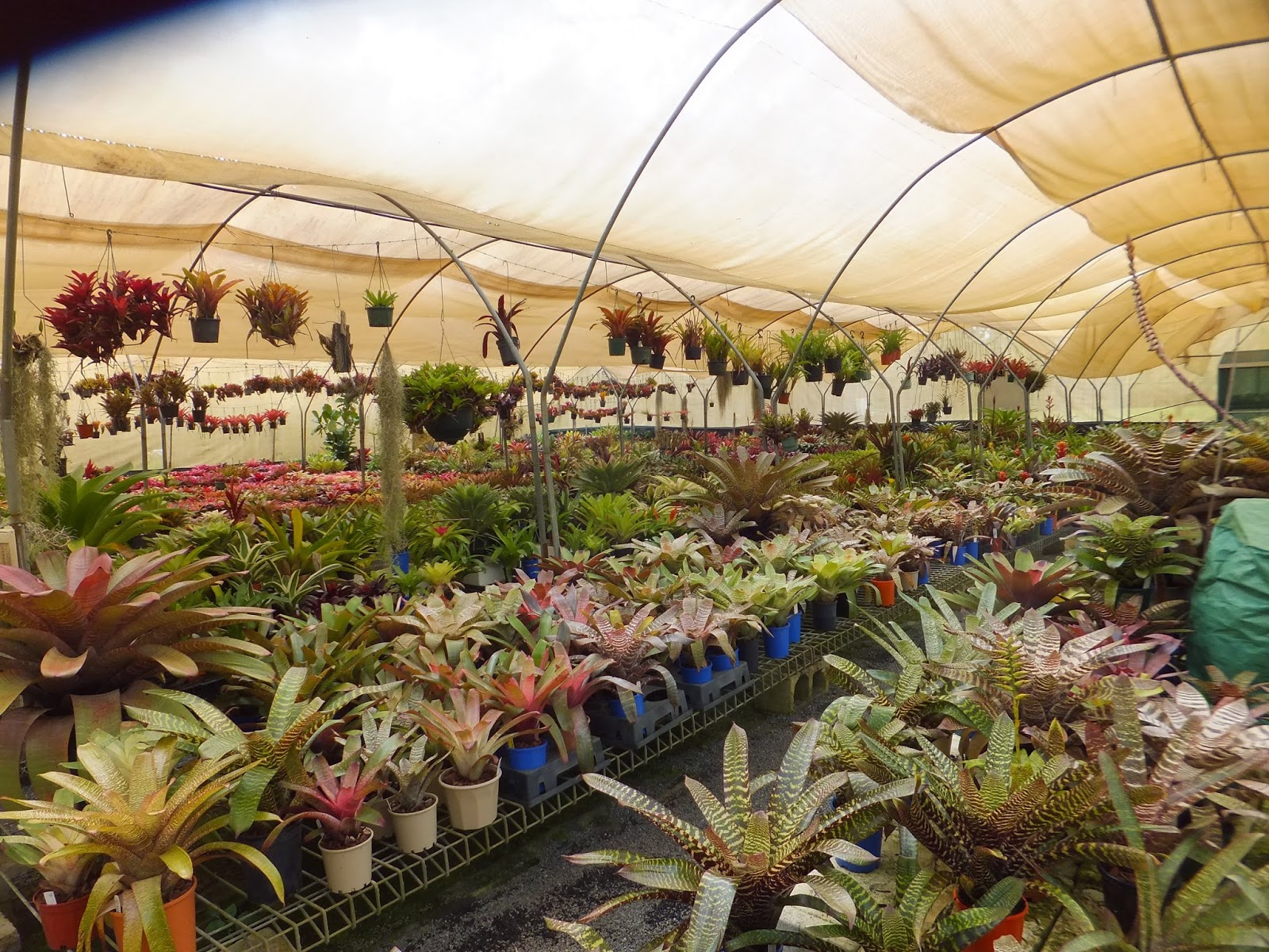 Coffs Harbour Garden Club: Outing to Bonville Broms 27 February 2015