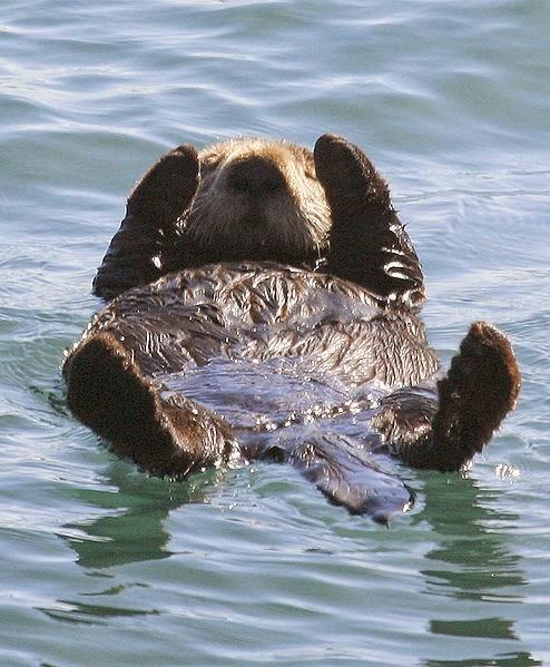 My APES: Sea Otter [Keystone Species] (Global)