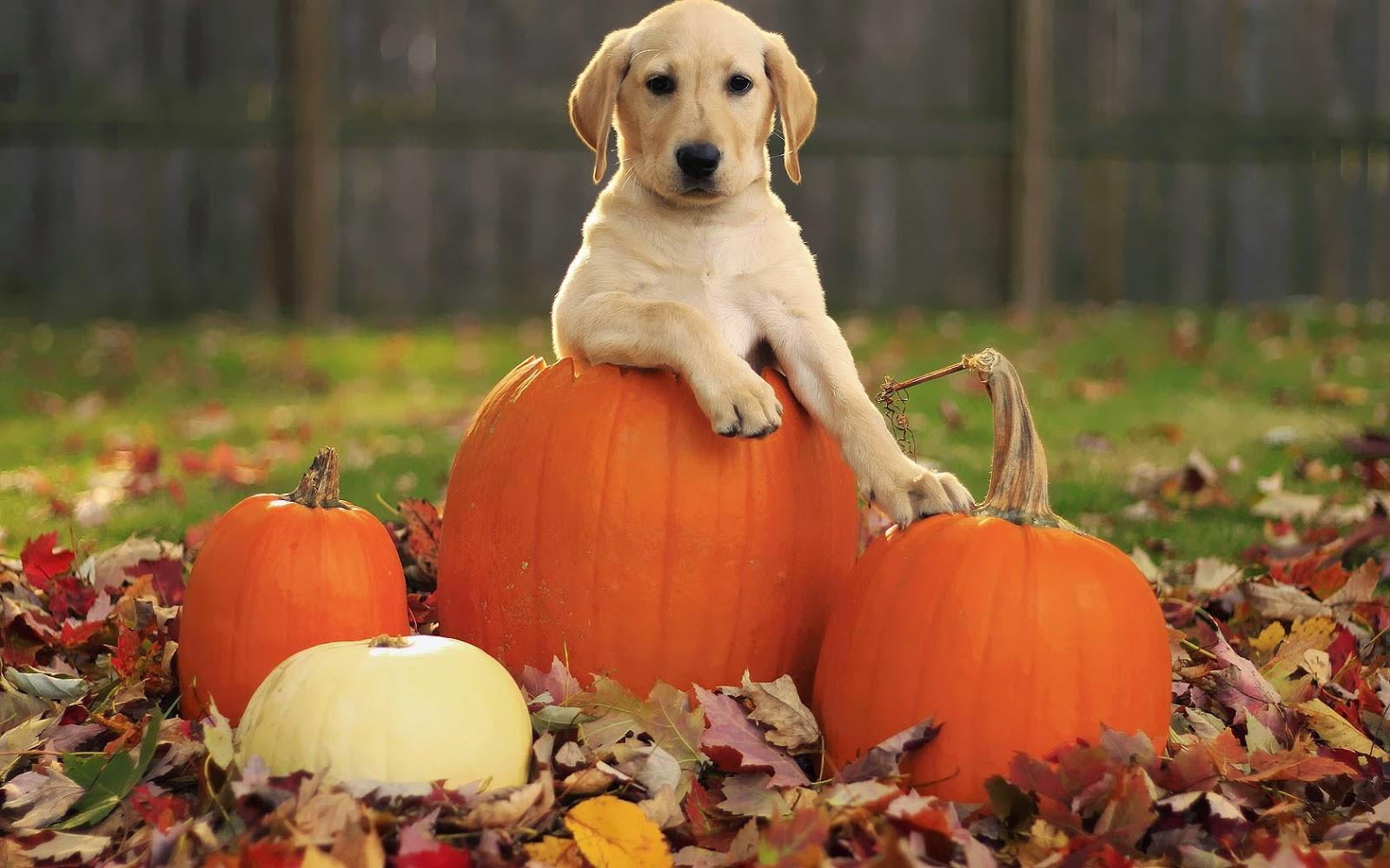 Funny halloween animals 4