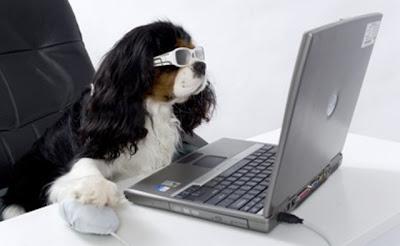 fotos de perros facebook