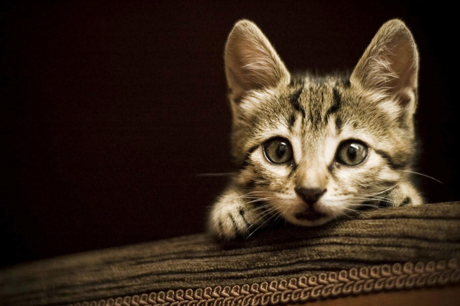 imagenes tiernas de perros y gatos , felinos