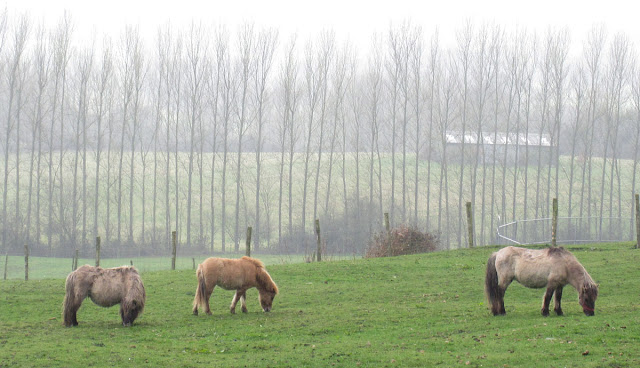 Small ponies.  Shetlands?  One Tree Hill, 17 March 2012.