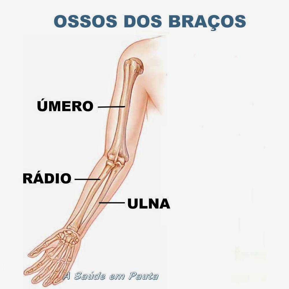 Nomes e localização dos ossos dos braços