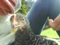 ..ecco quella nera in cerca di coccole!!