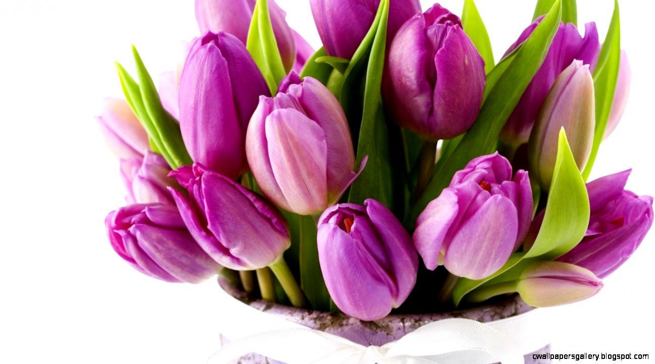 Wallpapers Tulip Landscape Wallpape Tulips Flowers Bouquet Purple