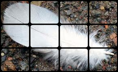 White feather comforting bereaved