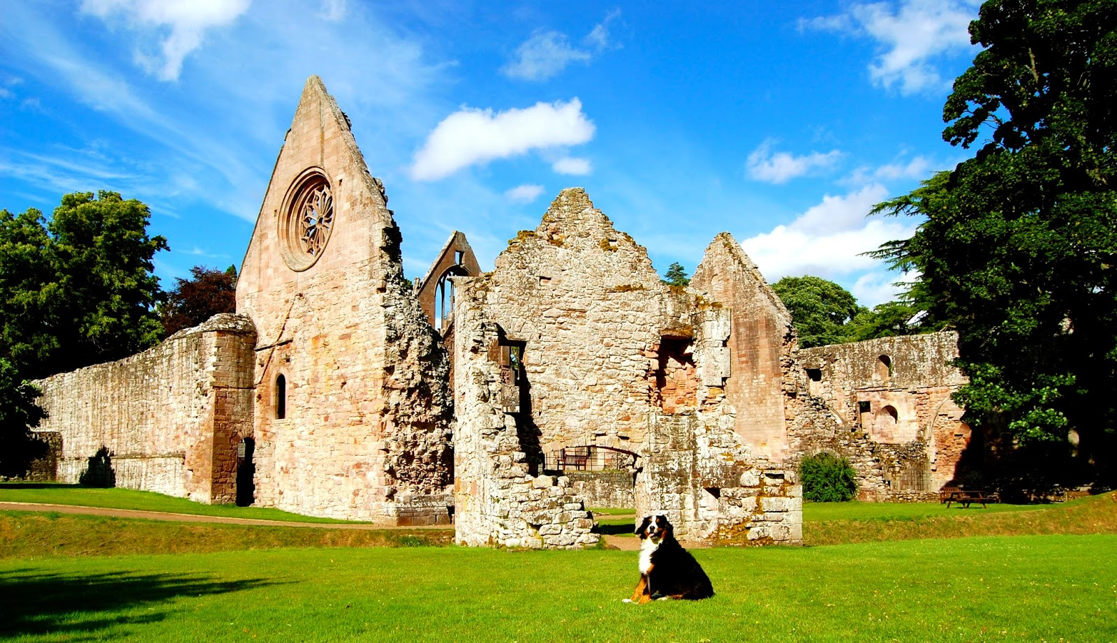 Mattie at the ruins of Dryburgh Abbey