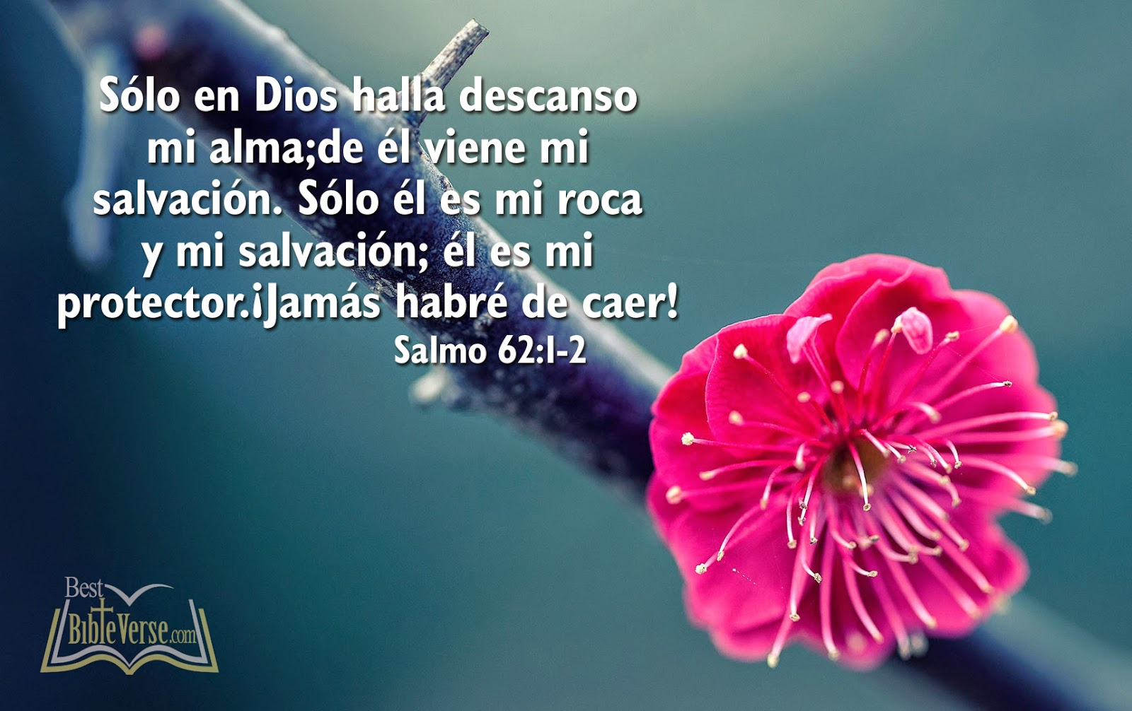 Bible Quotes In Spanish Quotesgram