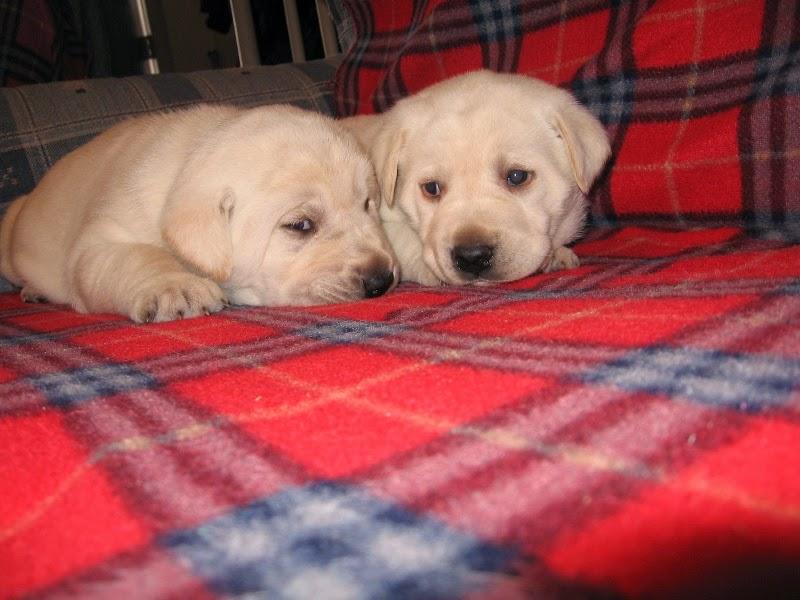 Kristi's Pups 2014
