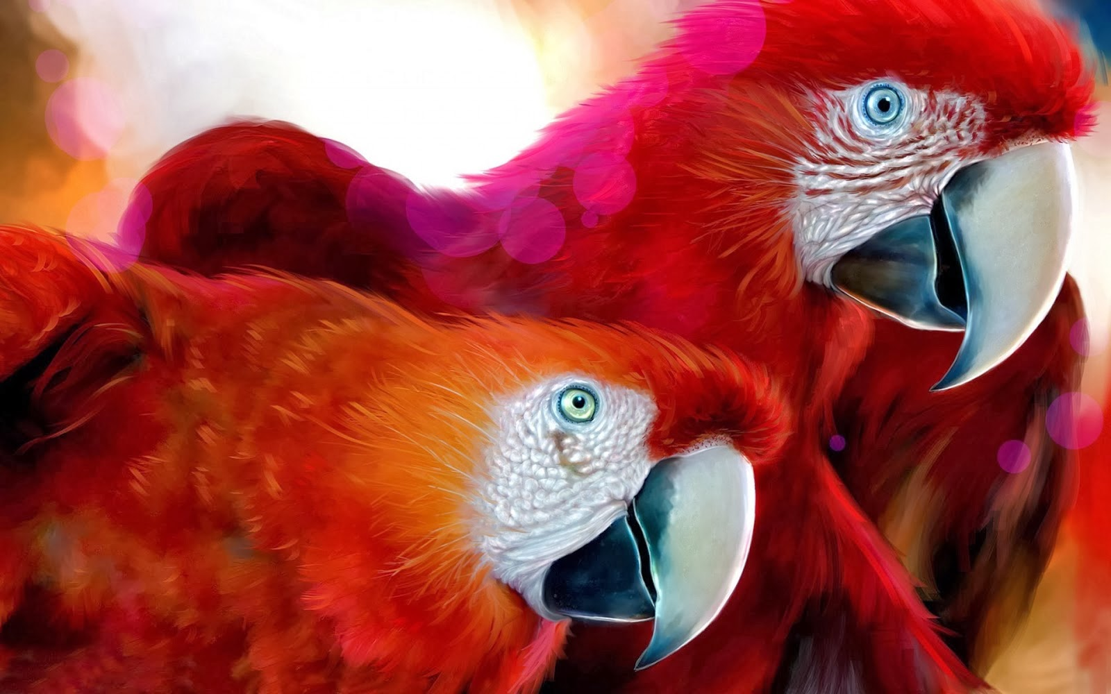 parrot hd wallpaper download 1080p parrot hd wallpaper download 1080p
