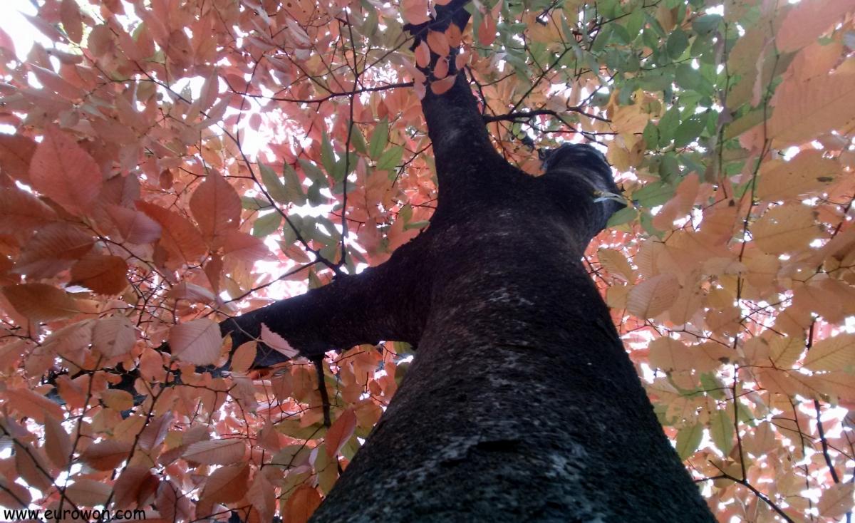 Árbol con hojas rojas