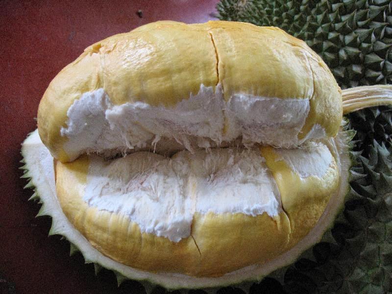 http://stockistab491.blogspot.com/2013/01/manfaat-buah-durian.html