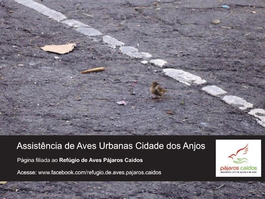 Assistência de Aves Urbanas Cidade dos Anjos