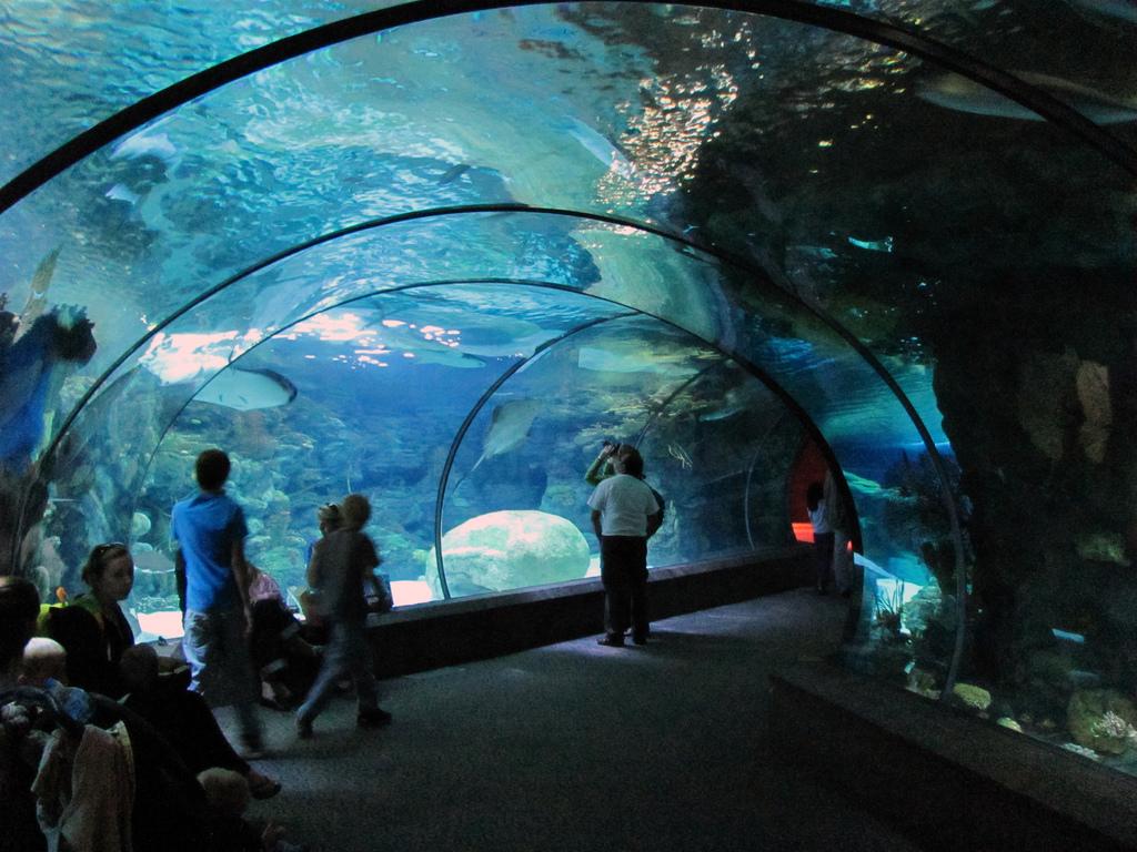 The Circus No Spin Zone Modern Aquariums