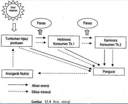 Artikel ipa hubungan antar komponen ekosistem httpdownload soalspot ccuart Image collections