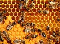 Cara test madu asli atau tidak