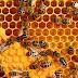Ternyata penemu madu adalah orang muslim
