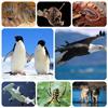 8 Hewan yang Setia Kepada Pasangannya