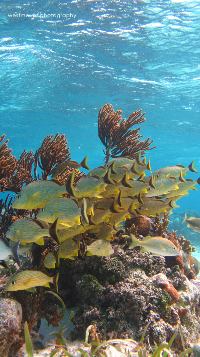 belize-scuba-diving