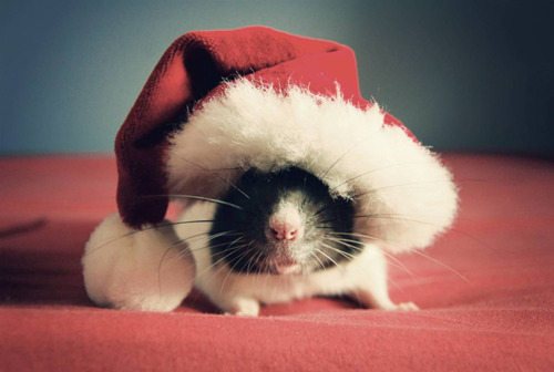 christmas cute mouse