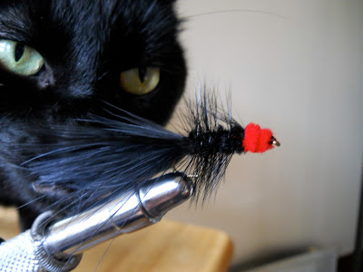 black cat sniffs a streamer in the tying vise