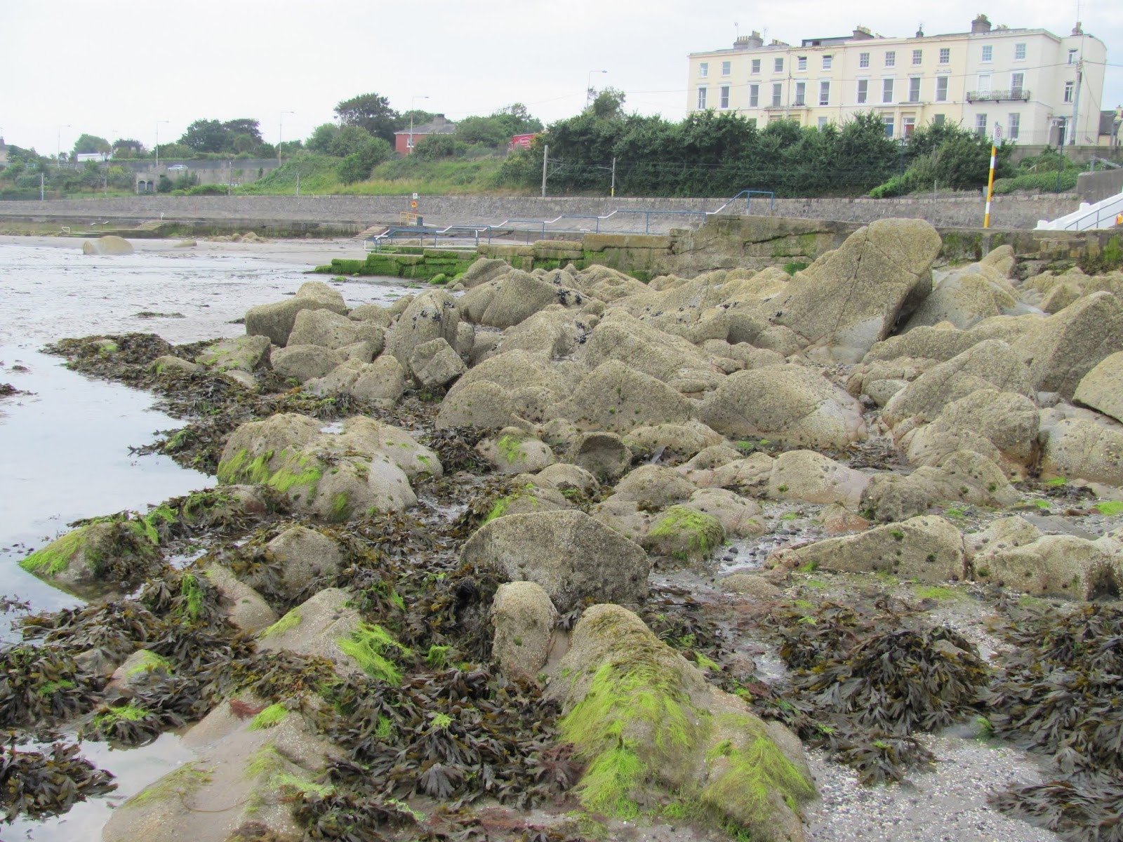 Rocks and seaweed are exposed at low tide at Seapoint Beach, Dublin, Ireland