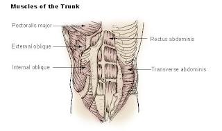 TapouT XT Core Muscles