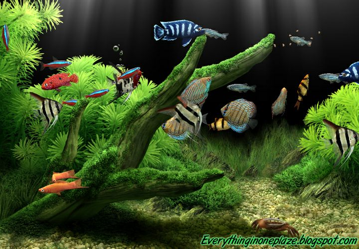 dream aquarium screensaver 1.24 serial number