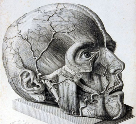 Brain Anatomical4